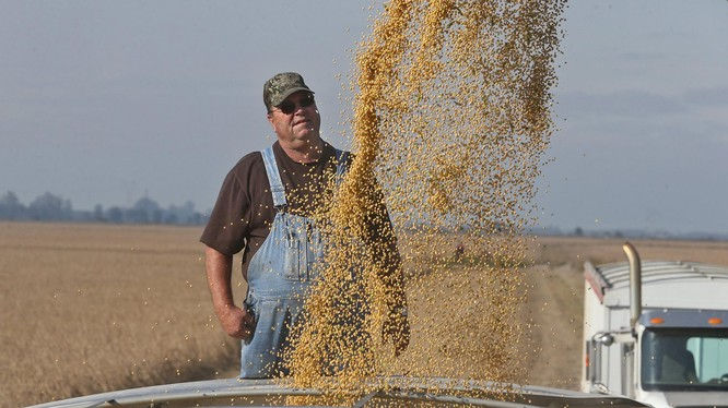 Trong chiến tranh thương mại, nông dân là diện chịu ảnh hưởng nặng nề nhất (Ảnh: AP)