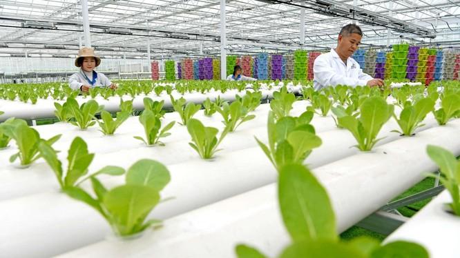 Chuyển đổi số đang được thúc đẩy mạnh mẽ ở vùng nông thôn Trung Quốc (Ảnh: People's Daily)
