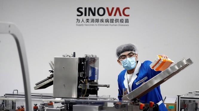 Một nhân viên làm việc trên dây chuyền sản xuất của Sinovac (Ảnh: Nikkei)