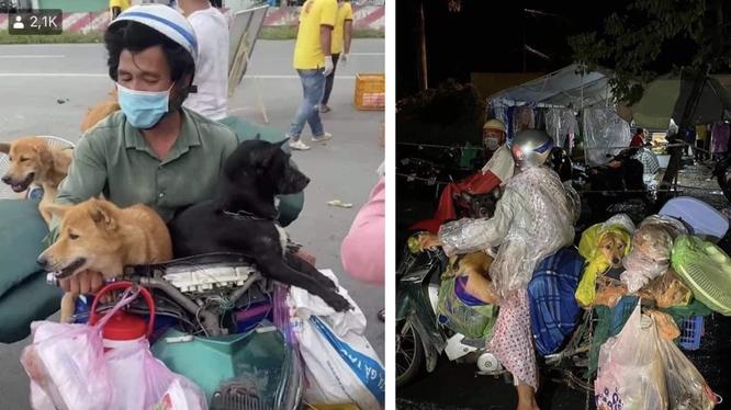 Hình ảnh cặp vợ chồng chở 15 chú chó từ Long An về Cà Mau được chia sẻ trên mạng xã hội (Ảnh - FB)