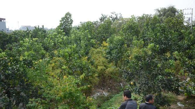 Khu đất rộng hơn 800m2 của ông Hùng ở khu phố Trung Hòa nằm trong diện có khả năng bị cưỡng chế.