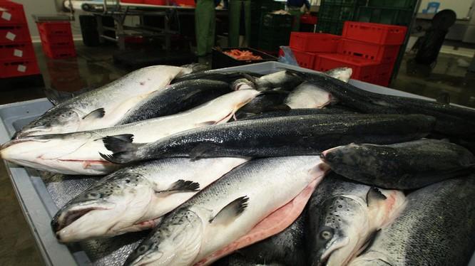 Nga áp dụng thêm biện pháp hạn chế nhập khẩu cá từ Việt Nam (ảnh minh họa).
