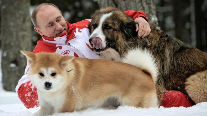 Báo Nga: Nhật Bản đang suy nghĩ lại việc tặng ông Putin con chó Akita Inu thứ hai.