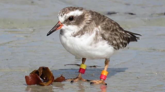Loài chim quý hiếm liên tục biến mất ở New Zealand. Ảnh: Dave Houston