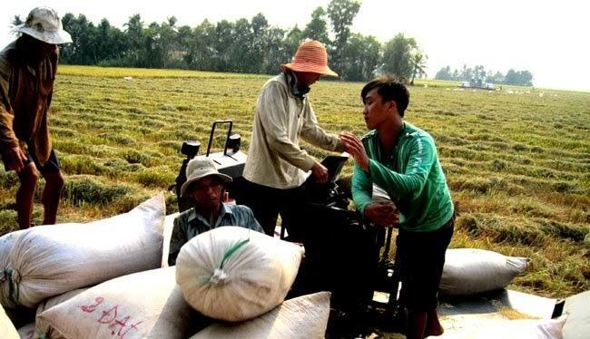 FDI vào nông nghiệp chưa costacs dụng thay đổi phương thức sản xuất truyền thống