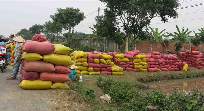 Thu mua tạm trữ lúa gạo
