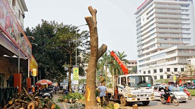 Cây xanh bị chặt hạ tại Hà Nội