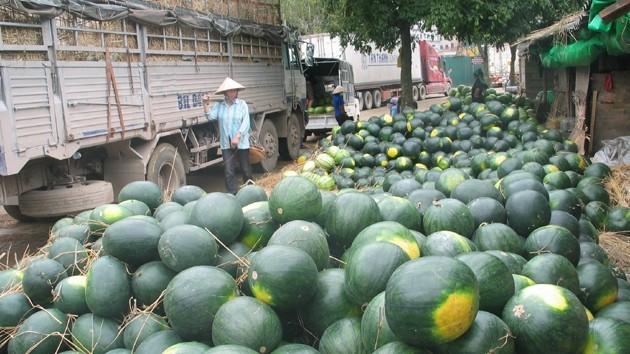 Ùn tắc hàng nông sản tại Lạng Sơn có thể kéo dài sang tháng 5