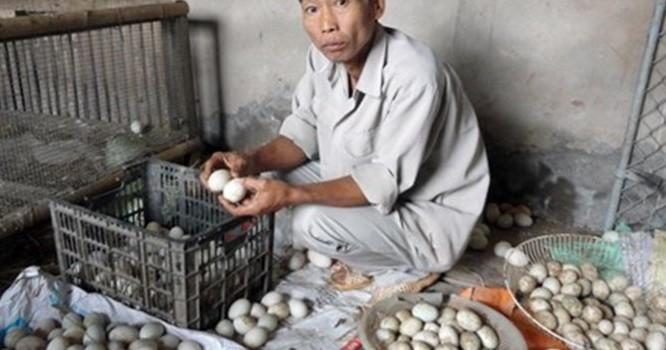 """Nghi vấn trứng vịt """"chuyển màu"""" sau khi dùng thức ăn chăn nuôi Trung Quốc"""