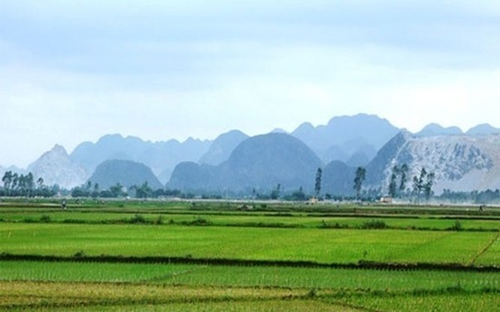 Chủ trương của Chính phủ là quyết giữ 3,8 triệu ha đất lúa hiện nay.