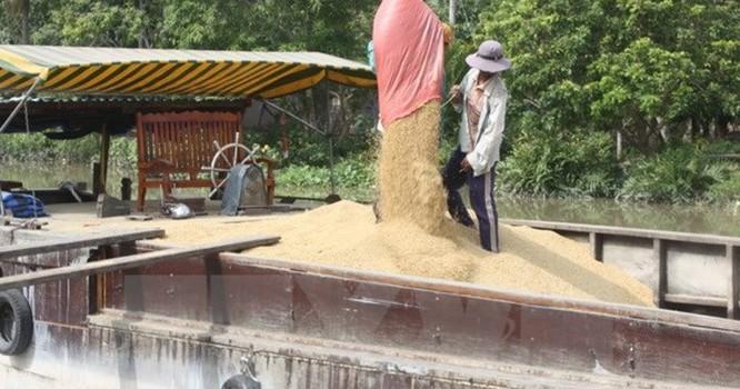 Thu mua lúa tạm trữ lúa của nông dân vụ Đông Xuân.