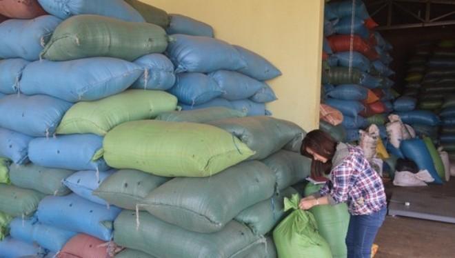 """Doanh nghiệp H.P. (huyện Cư Kuin, tỉnh Đắk Lắk) đang """"ôm"""" 50 tấn tiêu lép và 20 tấn tạp chết tiêu theo đơn đặt hàng của thương lái Trung Quốc"""