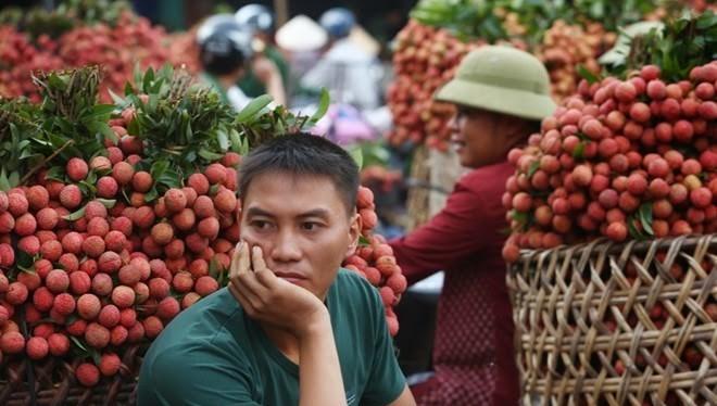 Mùa vải 2015: Vẫn phải trông chờ thị trường nội và xuất Trung Quốc