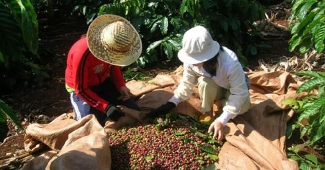 Cà phê đươc xác định là 1 trong số những sản phẩm chủ lực