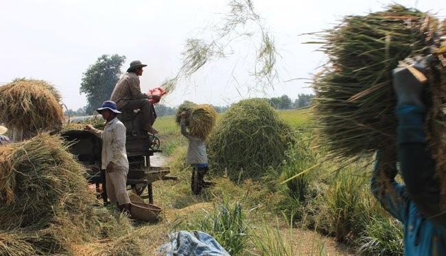 Chuyên gia cho rằng Việt Nam không nên chỉ dựa vào chính sách tỷ giá để duy trì sức cạnh tranh trên thị trường xuất khẩu.