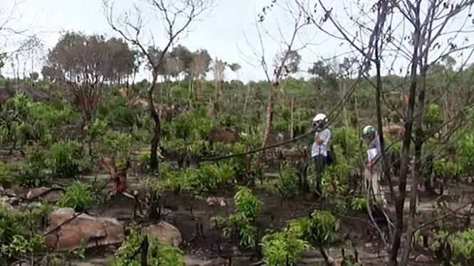 Một cánh rừng phòng hộ thuộc tiểu khu 81 trên núi Cô Sáu (thị trấn An Thới) bị đốt trụi