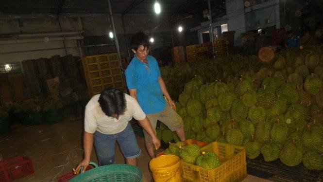 """Hai công nhân bị bắt quả tang đang """"tắm"""" hóa chất cho trái sầu riêng"""