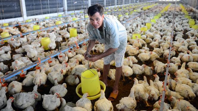 Thịt, sữa ngoại giá rẻ tràn ngập, nông dân hết đường sống?