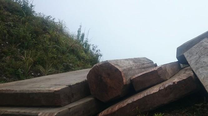 Một điểm tập kết gỗ của lâm tặc tại ngọn núi cách lán trại khoảng 1 km - Ảnh: Nam Anh
