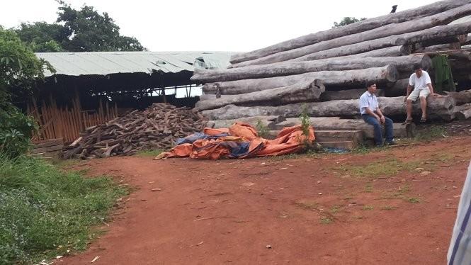 Bên trong xưởng gỗ của Công ty Bảo Hoàng tại làng Nú, xã Ia Nan (Đức Cơ, Gia Lai) bị kiểm tra đột xuất - Ảnh: B.D.