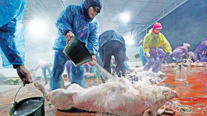 Người tiêu dùng bất an trước tình trạng hóa chất độc hại bị sử dụng tràn lan trong chăn nuôi, sản xuất, chế biến thực phẩm, đồng thời bất bình trước việc giết mổ mất vệ sinh, bơm nước vào gia súc, gia cầm... Ảnh: Chí Toàn.