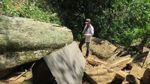 Sốc: Tây nguyên mất gần 34.000ha rừng mỗi năm