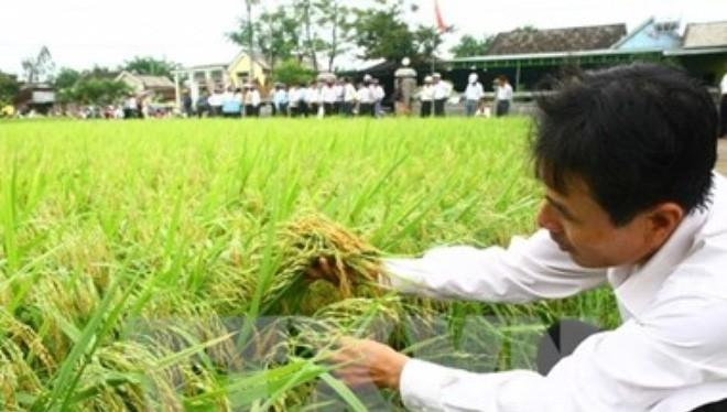 Năm 2016 sẽ mất thêm 100.000ha đất trồng lúa