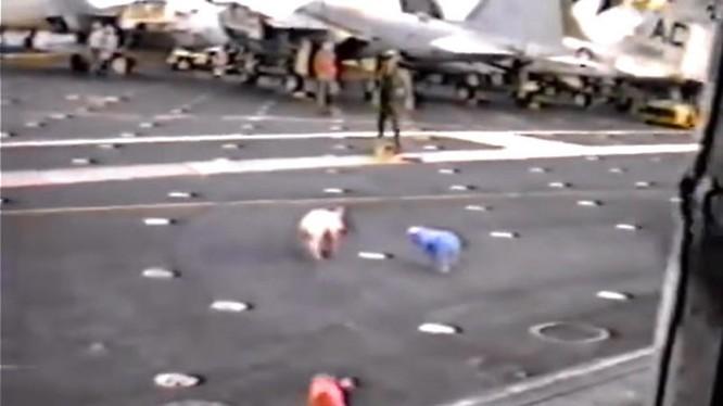 Heo chạy tán loạn trên tàu sân bay USS John F. Kennedy