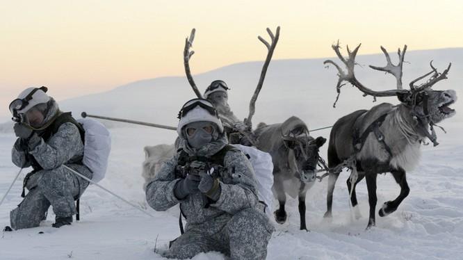 Clip tuần lộc và chó kéo xe tham gia huấn luyện tác chiến của Nga