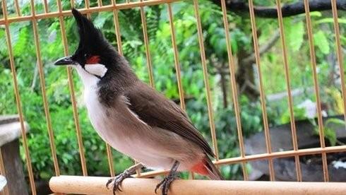 Trộm chim của giám đốc sở, 2 thanh niên bị truy tố