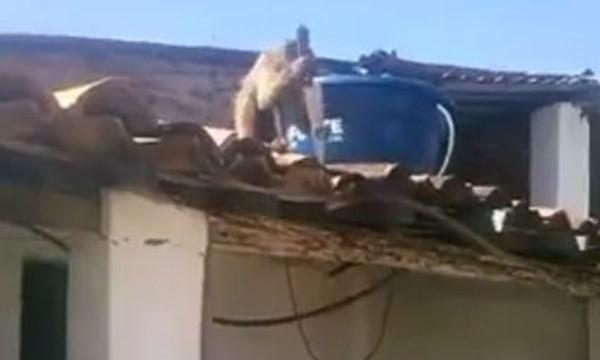 Video Khỉ say rượu trộm dao dọa đâm người