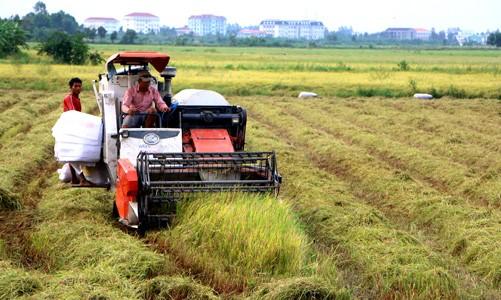 Chưa lo thiếu lương thực Đồng bằng sông Cửu Long (ĐBSCL) là vựa lúa của cả nước. Vụ đông xuân 2015 -2016, khu vực này gieo cấy 1,5 triệu ha thì đã có 1/3 diện tích bị ảnh hưởng của hạn hán và xâm nhập mặn. Trong đó, trên có 150.000 ha bị thiệt hại nặng (