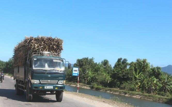 Một xe vận chuyển mía nguyên liệu đang trên đường đến nhà máy đường. Ảnh: TL