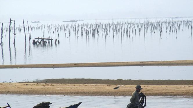 Nghề nuôi hàu trên đầm Lăng Cô là nguồn sống của hàng trăm hộ gia đìnhẢnh: Đình Toàn