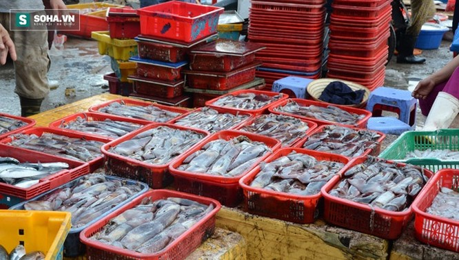 """Đà Nẵng """"chốt"""" danh sách chợ bán hải sản sạch trên địa bàn"""