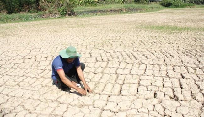 Hiện ĐBSCL có khoảng 1,5 triệu nông dân trồng lúa và gần 475.000 hộ dân thiếu nước ngọt sinh hoạt