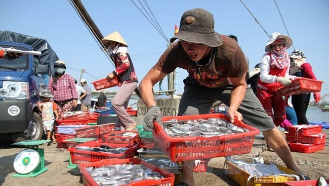 Ngư dân Quảng Trị vận chuyển cá lên bờ sau chuyến đánh bắt hải sản ngoài khơi xa.