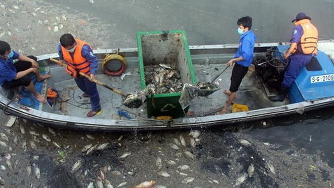 Các công nhân vớt xác cá nổi trên kênh Nhiêu Lộc - Thị Nghè đoạn gần cầu số 5 sáng 18-5 - Ảnh: Q.Khải