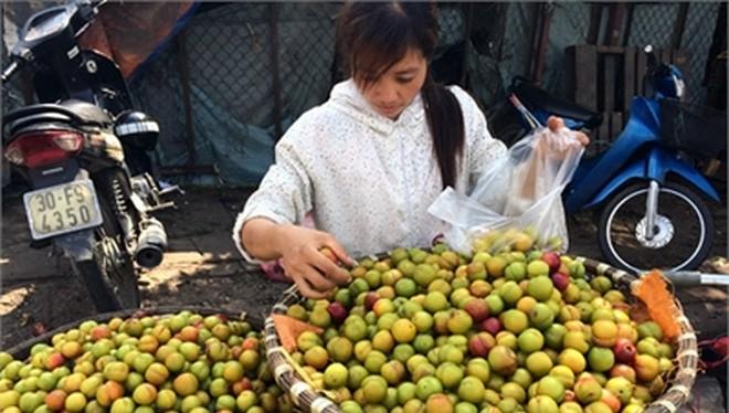 Sau mùa mận tam hoa của Việt Nam, mận cơm đường Trung Quốc phủ sóng tại các chợ Việt Nam