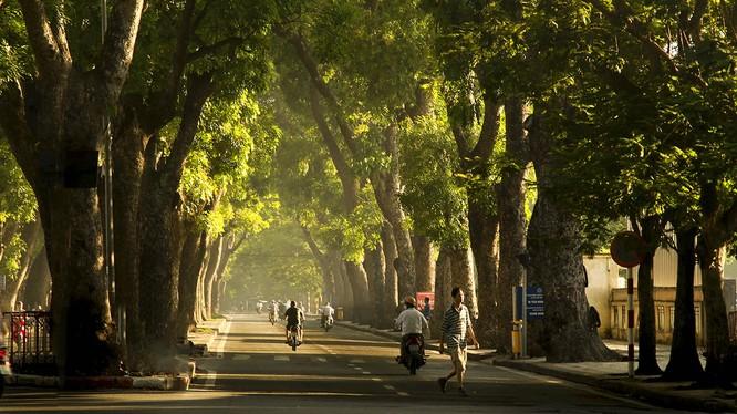 Nhật Bản hỗ trợ Hà Nội.... quy hoạch cây xanh
