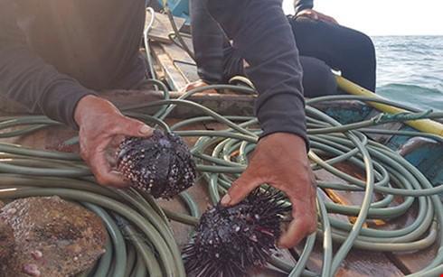 Ngôi nhà chung của nhiều loài sinh vật biển bị phá hủy do Formosa xả thải (Ảnh: PLO)