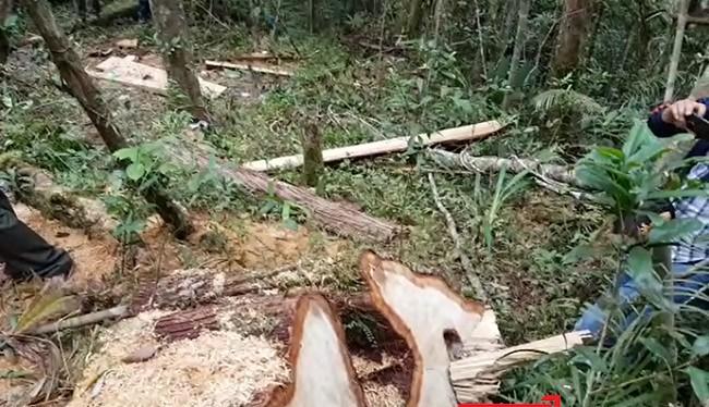 Phó Chủ tịch UBND tỉnh Quảng Nam Lê Trí Thanh kiểm tra thực địa vụ phá rừng pơ mu tại khu vực biên giới xã Chà Vàl, huyện Nam Giang