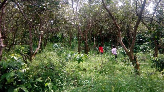 Nhiều diện tích đất của người dân xã Đắk Ngo đang có tranh chấp chưa thể giải quyết xong. Trong ảnh: Nhà và vườn rẫy của người dân buôn Phi La Te, xã Đắk Ngo, huyện Tuy Đức, Đắk Nông - Ảnh: B.D.