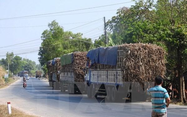 """Một """"cò canh đường"""" đang gọi báo động cho các tài xế xe chở mía trên đường Trần Văn Trà (địa phận xã Bình Minh, thành phố Tây Ninh ). (Ảnh: Thanh Tân/TTXVN)"""