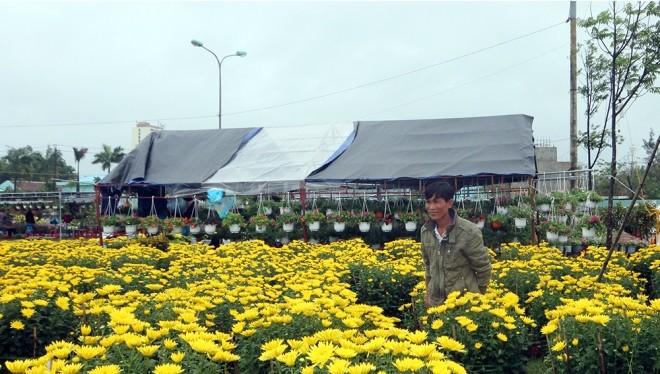 Những ngày cận Tết, trời mưa kéo dài tại nhiều tỉnh miền Trung nên lượng người mua giảm. Sáng 26/1 (29 Tết), trời rực nắng khiến mặt hàng này sôi động trở lại.