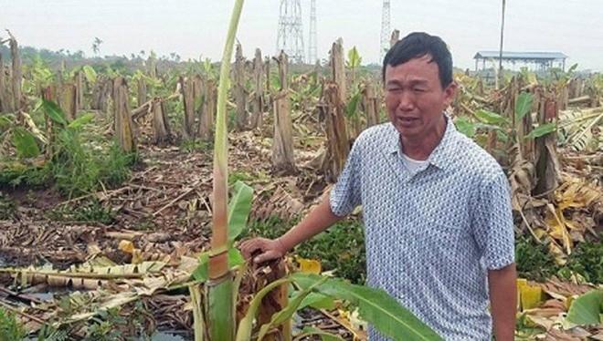 Ông Phạm Văn Quân bên cánh đồng chuối bị chặt. Ảnh: Vietnamnet.