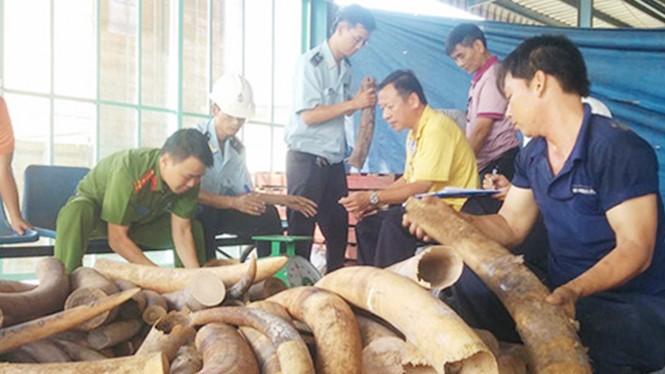 Một vụ bắt giữ buôn lậu ngà voi. Ảnh: CAND
