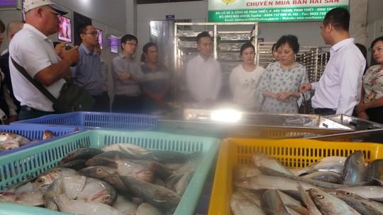 Trưởng Ban Quản lý An toàn thực phẩm TP HCM kiểm tra, khảo sát thủy, hải sản tại tỉnh Bình Thuận