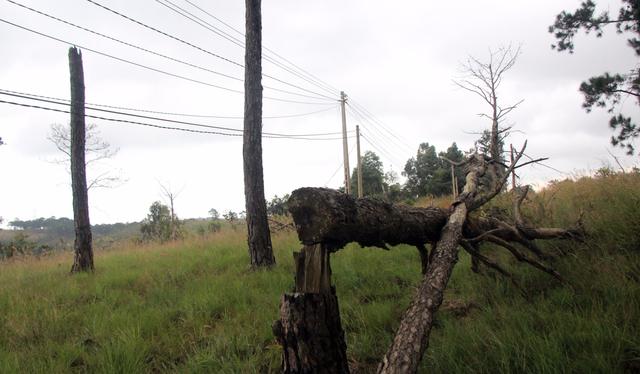 Do đế mất rừng, sử dụng đất lâm nghiệp không đúng quy định, nhiều cán bộ, đảng viên tại Đắk Nông bị kỷ luật trong năm 2017 - Ảnh: TRUNG TÂN