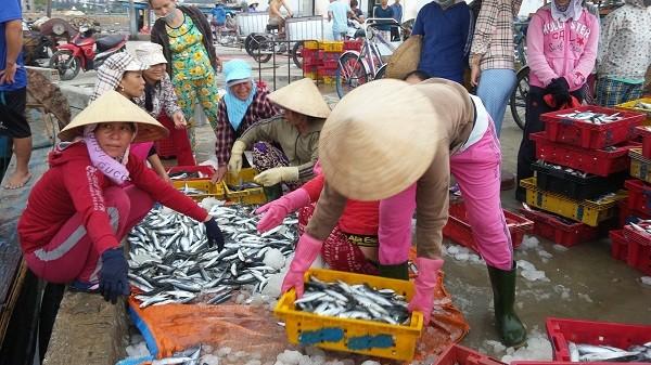 Tất cả hải sản tầng nổi 4 tỉnh miền Trung đều đảm bảo an toàn